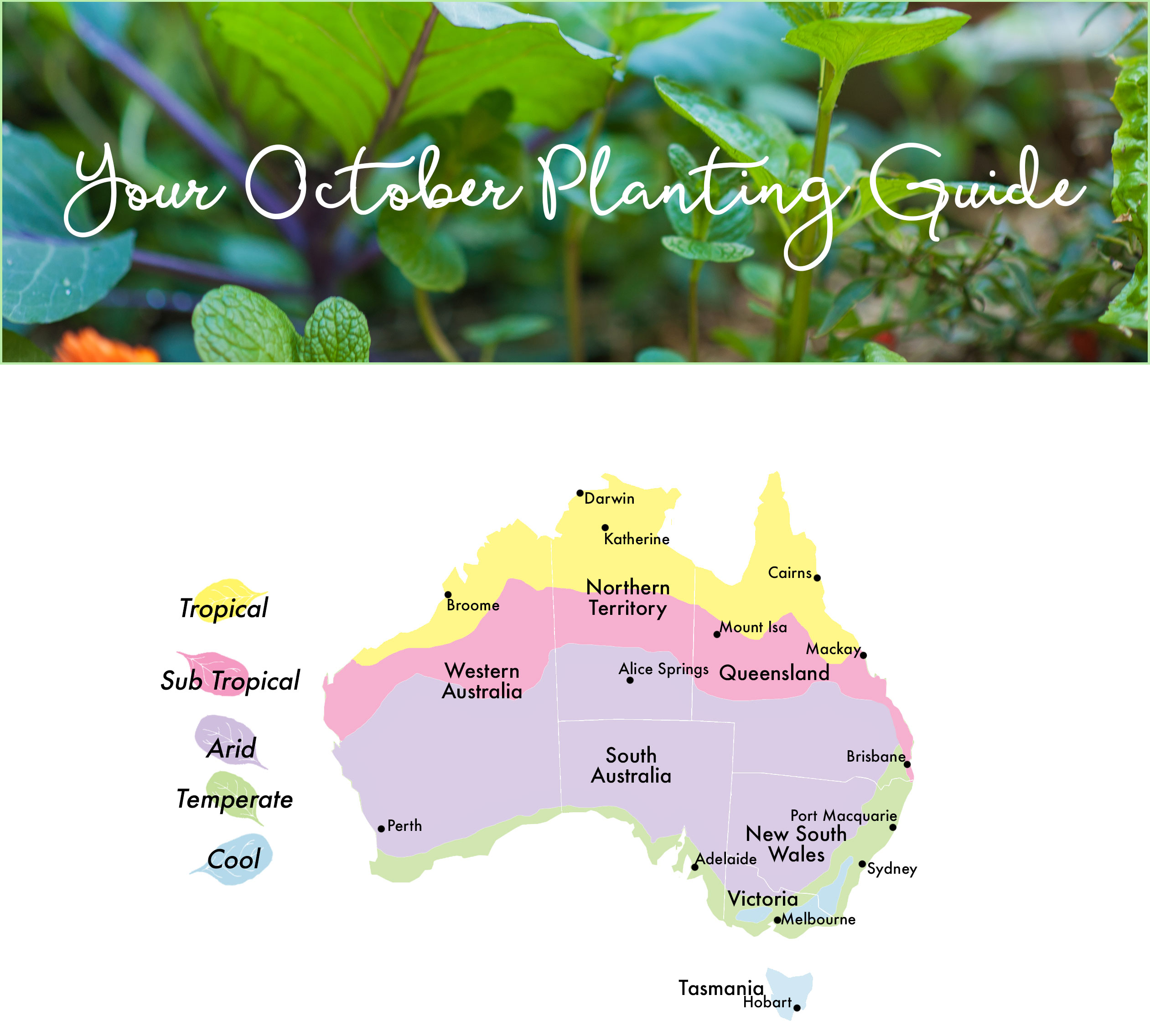 October edible planting guide australia the healthy patch - Gardening in october a brief to do list ...