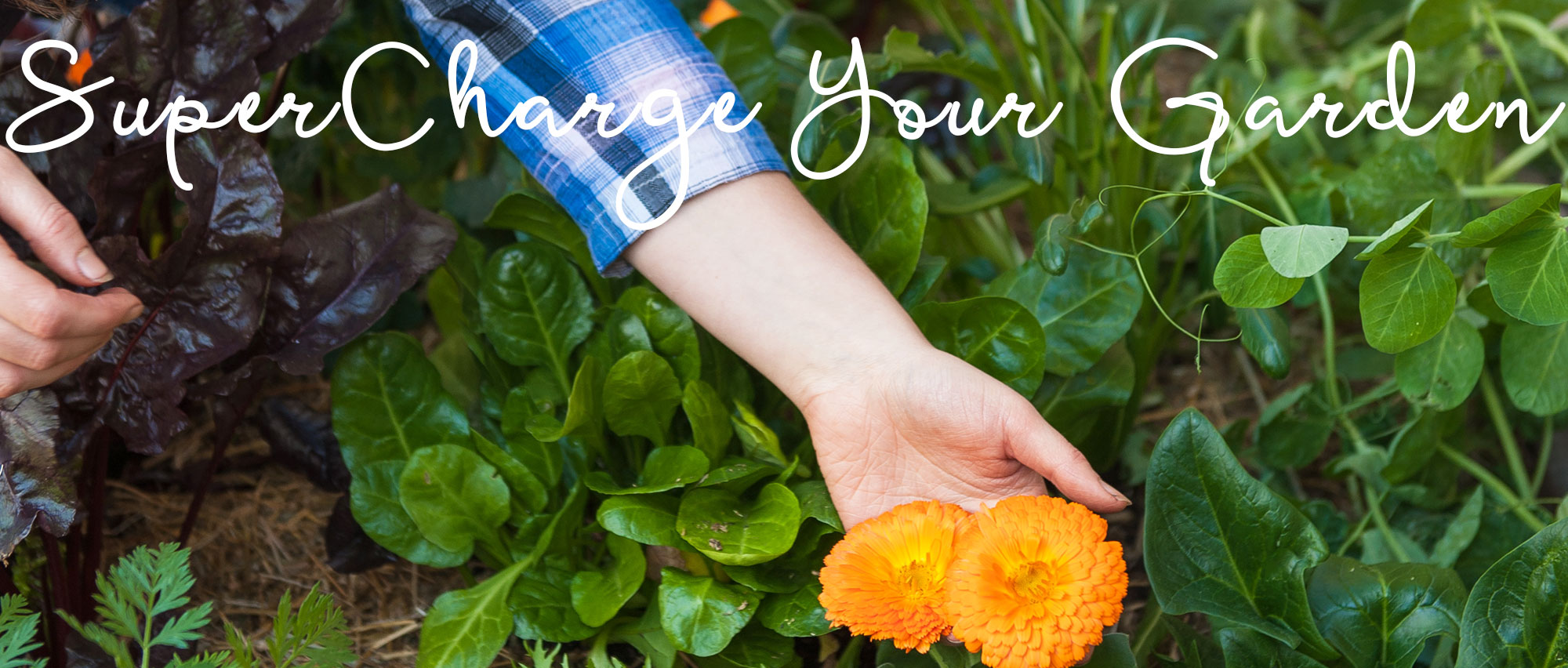 supercharge-your-garden-healthy-blog