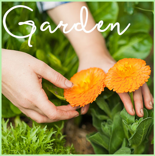 the-healthy-patch-garden-widget