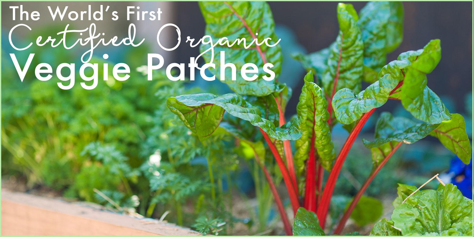 organic-veggie-patch